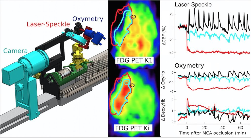 <p>For the analysis of the demand-related regulation of cerebral energy metabolism in rats, a laser speckle imaging and an oxymetry device were mounted on a PET animal bed (left). Responses in glucose metabolism (middle), blood flow, and blood oxygenation (right) to cortical spreading depressions spontaneously occurring after focal cerebral ischemia were recorded simultaneously.</p>