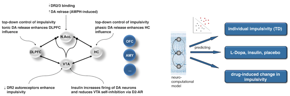Fig. 3. Investigating insulin modulation of dopaminergic mechanisms underlying impulsivity. Generative modelling techniques allow to obtain quantitative in vivo markers of dopaminergic transmission and its modulation by hormones, and thus, furnish a mechanistic understanding of insulin action in the CNS.
